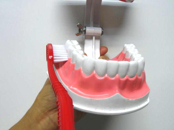 刷毛要傾斜45度,沿著牙齦(牙肉)與牙齒外側邊緣,以三顆牙齒為一組,輕柔地清潔每顆牙齒的牙齦(牙肉)與牙齒邊緣。