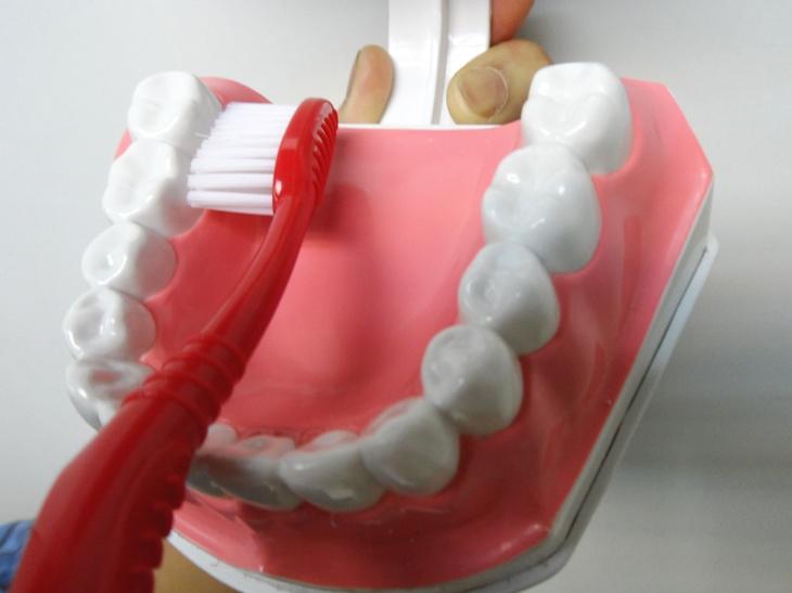 沿著牙齦(牙肉)與牙齒內側邊緣及大牙後側,輕柔地刷每顆牙的內壁。